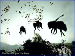 bees leaving