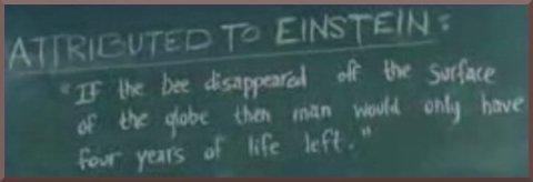 Einstein Says