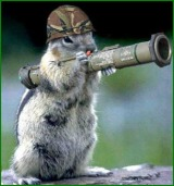 bazooka squirrel