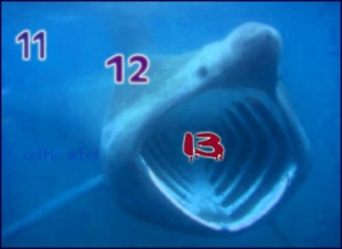 number shark