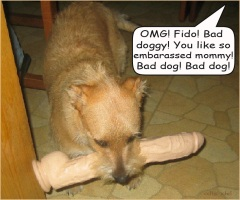 bad doggie