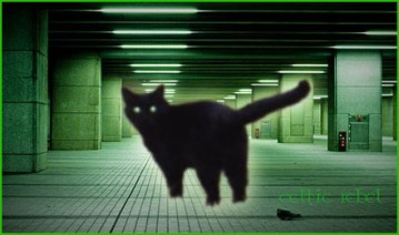 matrix cat