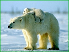 polar dummies