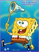 sponge bob is gay