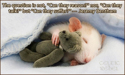 Rat Teddy Bear Suffer