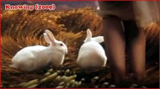 white bunnies knowing
