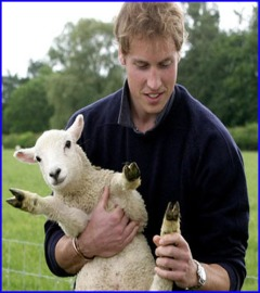 prince lamb