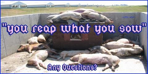 reap sow