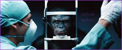 Animal Testing Damns Our Souls