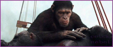 Ape Empathy and Compassion
