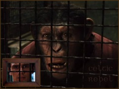 Ape Cage Mirror