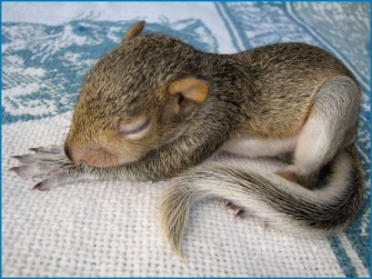 baby squirrel girl