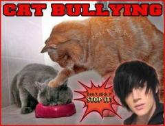 metro bob cat bullying