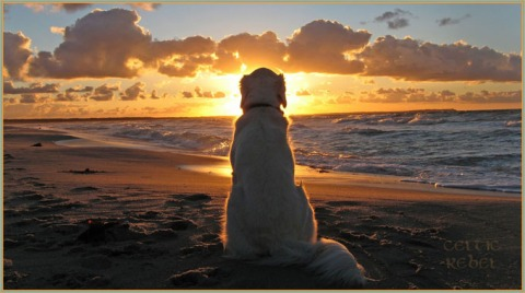 sunset beach dog